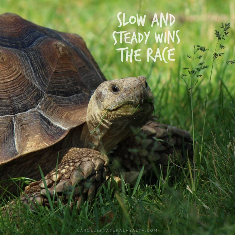 Slow And Steady Wins The Race Carol Lee Natural Health